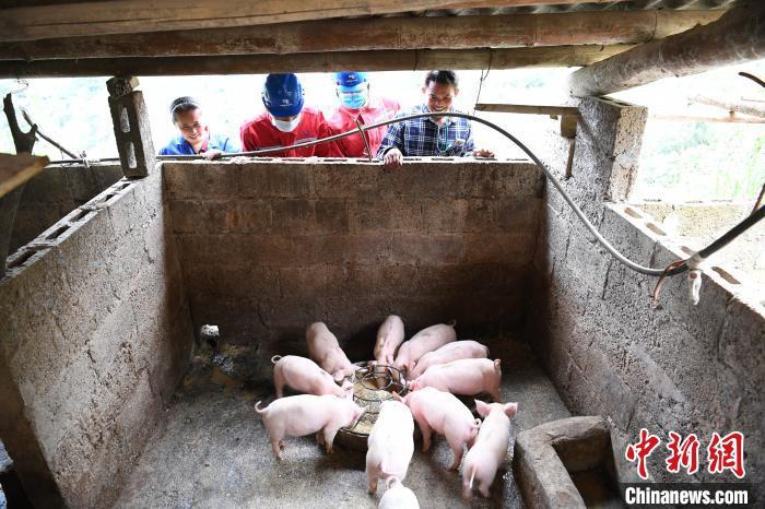 3月18日,南方电网广西新电力集团那坡分公司工作人员到陆文红、马金梅夫妻的养猪场了解用电需求,开展安全供电服务。 岳浩 摄